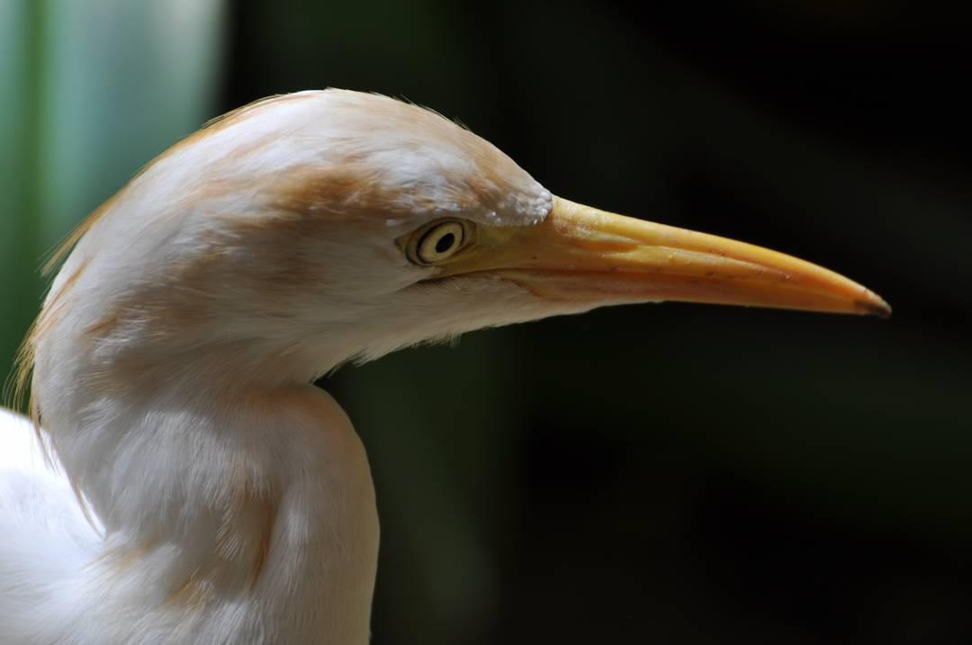 KL Bird Park, Kuala Lumpur