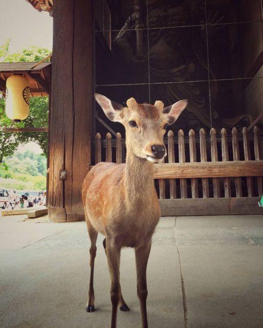Nara, Japonsko 2016